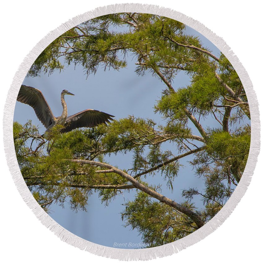 Great Blue Heron Round Beach Towel featuring the photograph Great Blue Heron In Cypress by Brent Bordelon