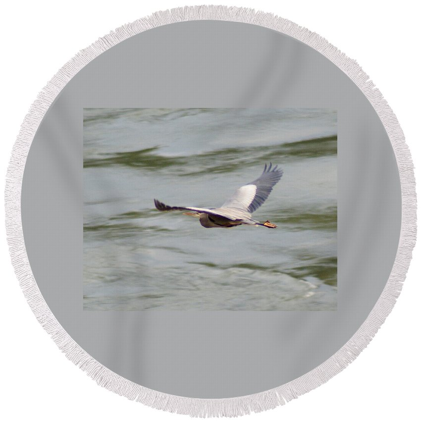 Birds Round Beach Towel featuring the photograph Great Blue Heron In Flight by Ben Upham III