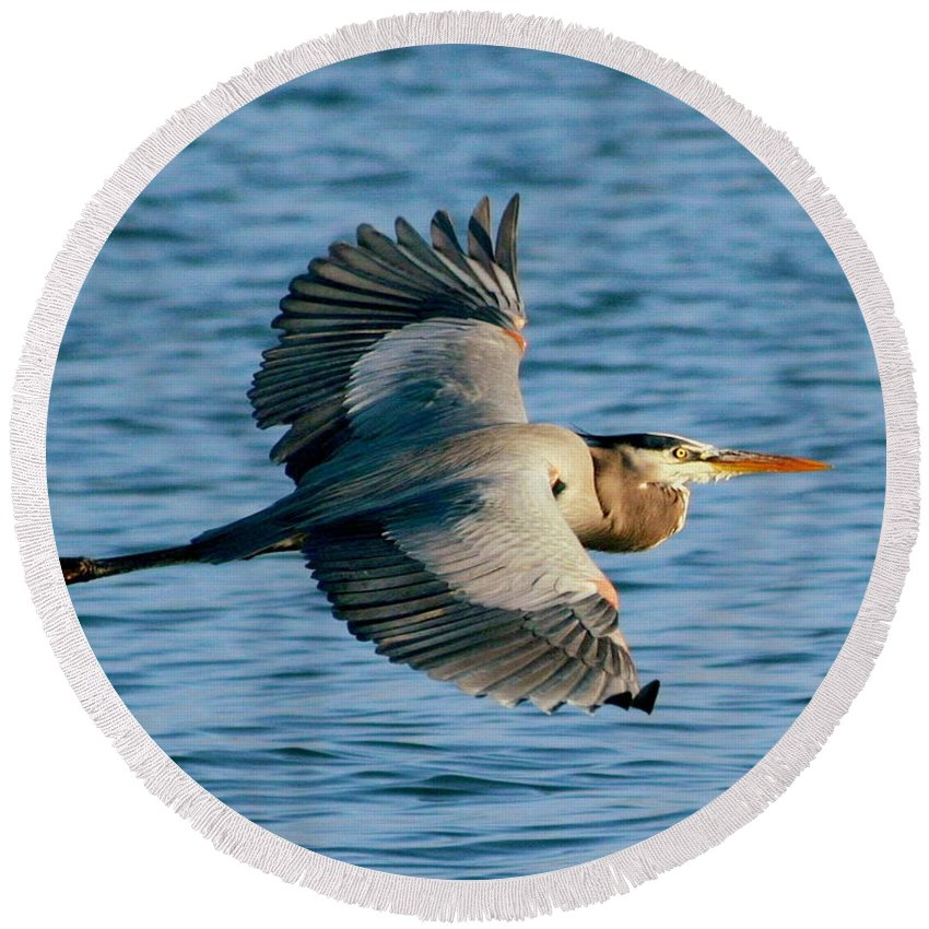 Great Blue Heron In Flight Round Beach Towel featuring the photograph Great Blue Heron In Flight by W Gilroy
