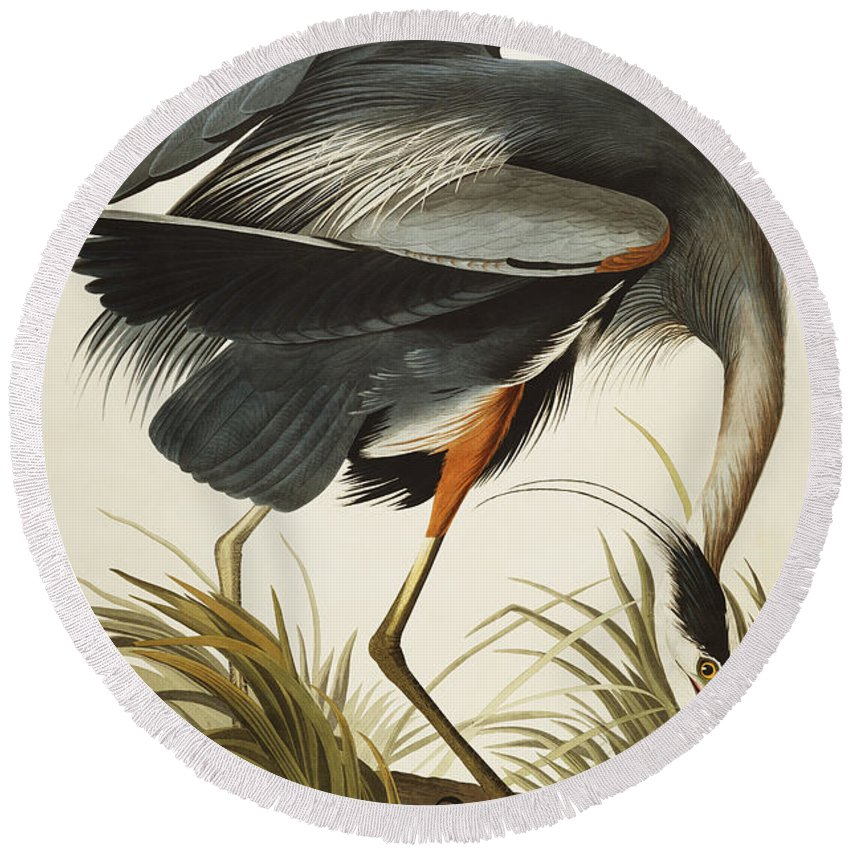 Great Blue Heron Round Beach Towel featuring the drawing Great Blue Heron by John James Audubon