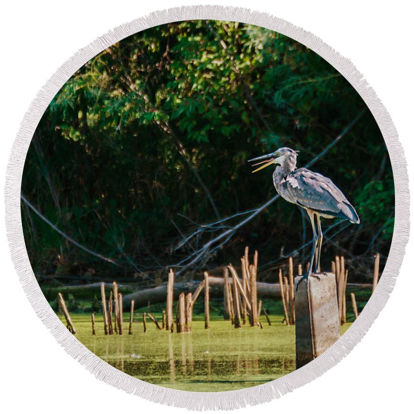 Great Blue Heron Round Beach Towel featuring the photograph Great Blue Heron Mouth by Edward Peterson
