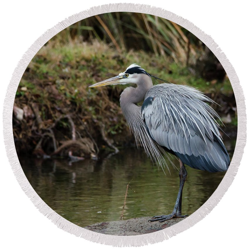 Hero Round Beach Towel featuring the photograph Great Blue Heron On The Watch by George Randy Bass