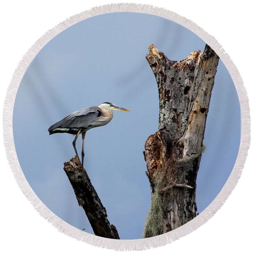 Great Blue Heron Round Beach Towel featuring the photograph Great Blue Heron Perched by Barbara Bowen
