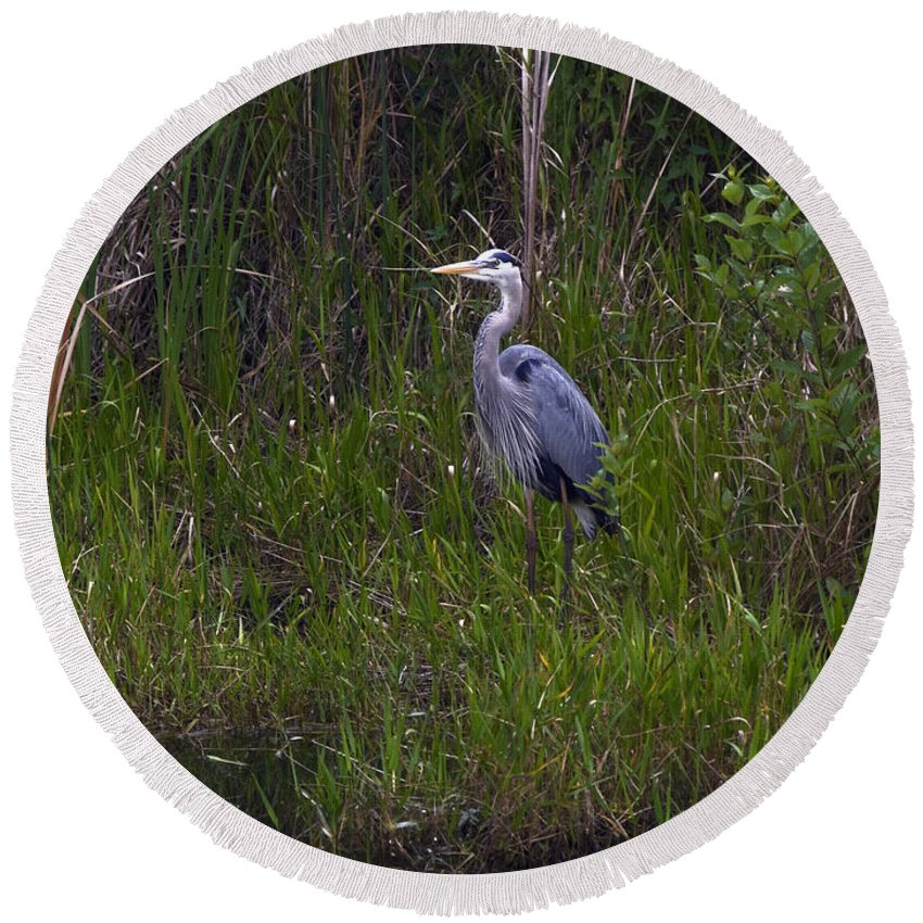 Great Blue Heron Standing Round Beach Towel featuring the photograph Great Blue Heron by Sally Weigand