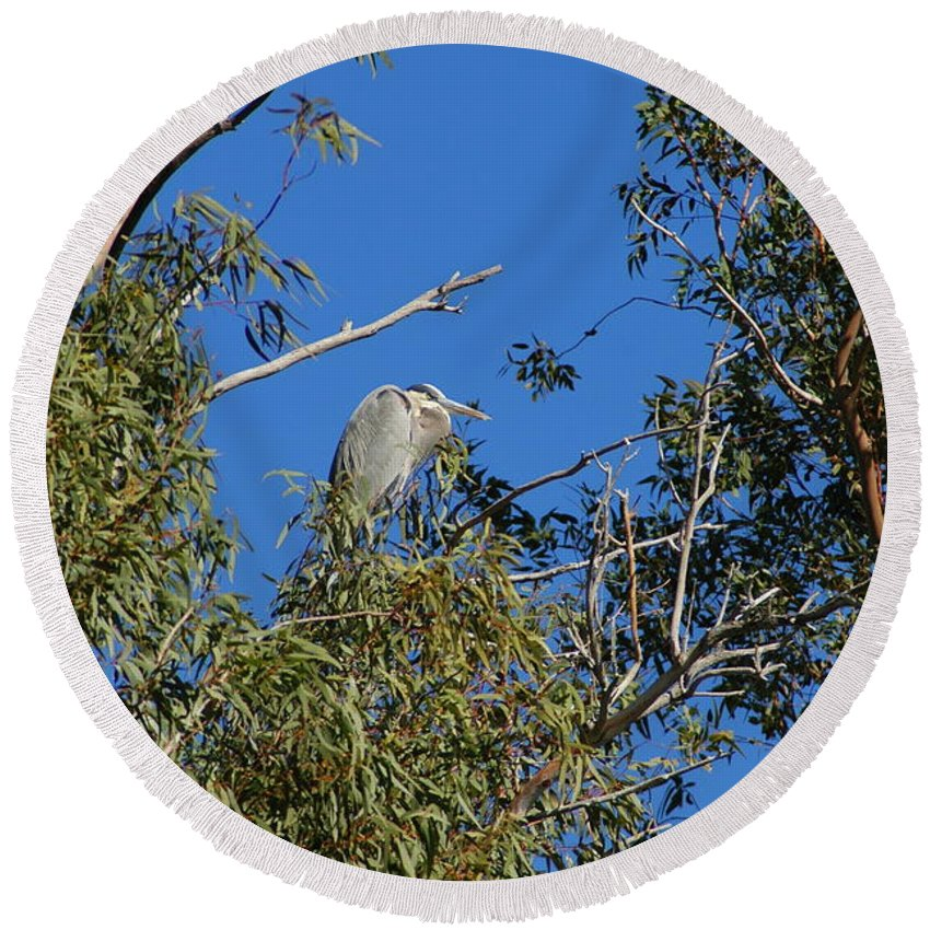 Heron Round Beach Towel featuring the photograph Great Blue Heron by Teresa Stallings