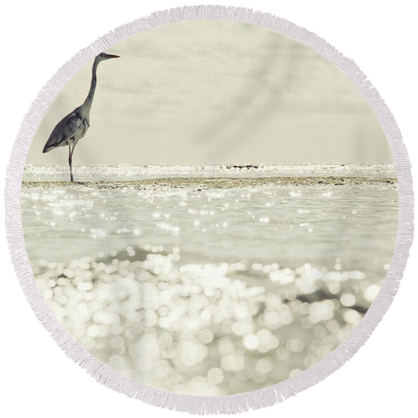Animal Round Beach Towel featuring the photograph Great Egret Aka Great White Grey Heron In Maldives by Srdjan Kirtic