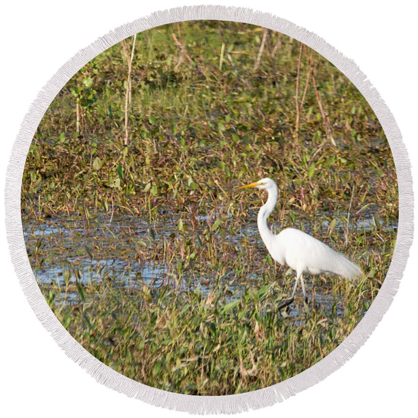 Great Egret Round Beach Towel featuring the photograph Great Egret Fishing by Linda Kerkau