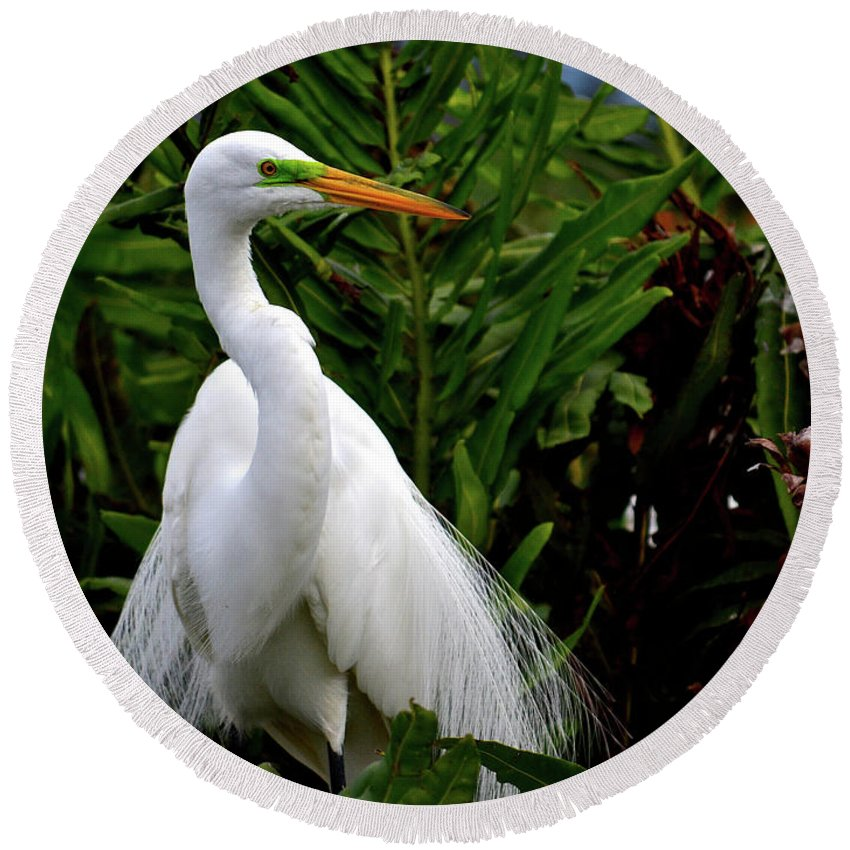Environment Round Beach Towel featuring the photograph Great Egret Nesting by Krista Russell