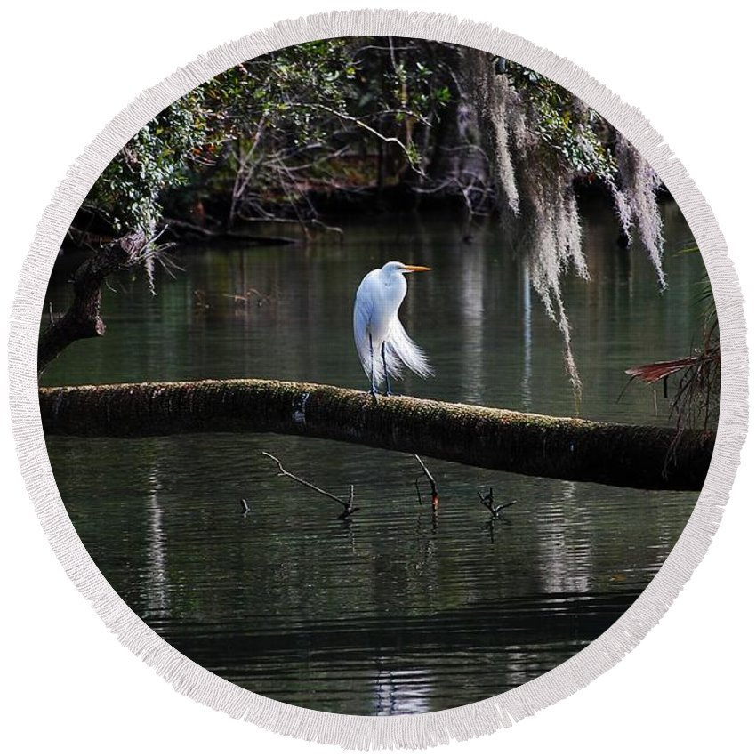 Egret Round Beach Towel featuring the photograph Great Egret by Robert Meanor