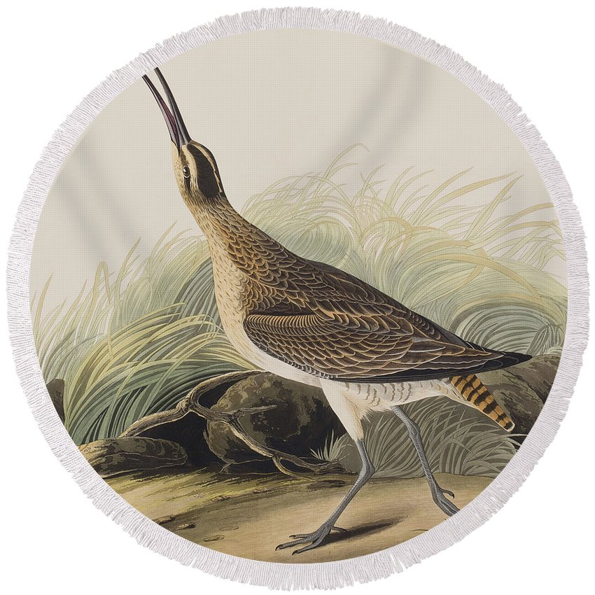 Curlew Round Beach Towel featuring the painting Great Esquimaux Curlew by John James Audubon
