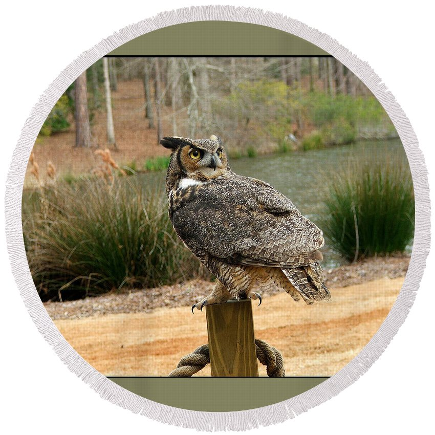 Wildlife Round Beach Towel featuring the photograph Great Horned Owl 1 by Robert Meanor