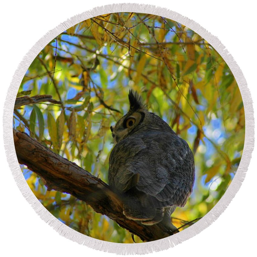 Large Round Beach Towel featuring the photograph Great Horned Owl 2 by Teresa Stallings