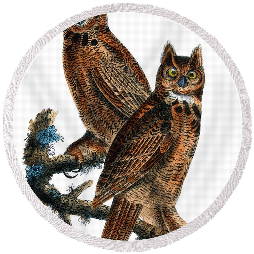Great Horned Owl Round Beach Towel featuring the painting Great Horned Owl Audubon Birds Of America 1st Edition 1840 Royal Octavo Plate 39 by Orchard Arts