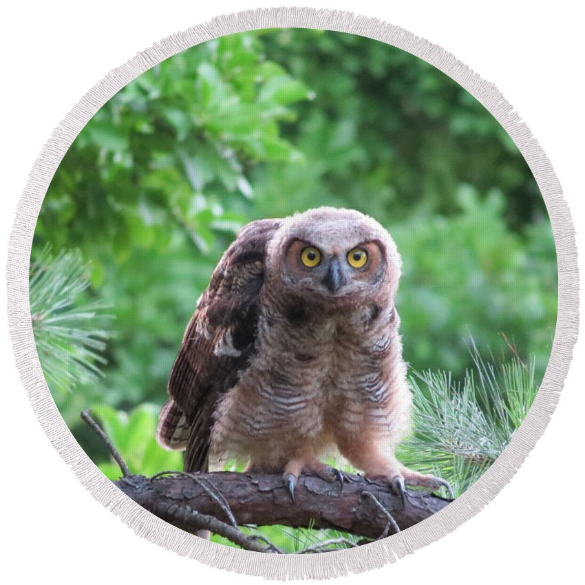 Great Horned Owl Round Beach Towel featuring the photograph Eye To Eye by Charles Green