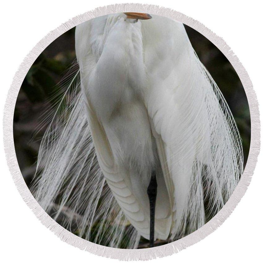 Bird Round Beach Towel featuring the photograph Great White Egret Windblown by Sabrina L Ryan