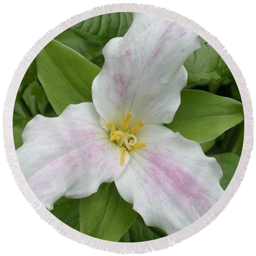 Trillium Round Beach Towel featuring the photograph Great White Trillium by Nelson Strong