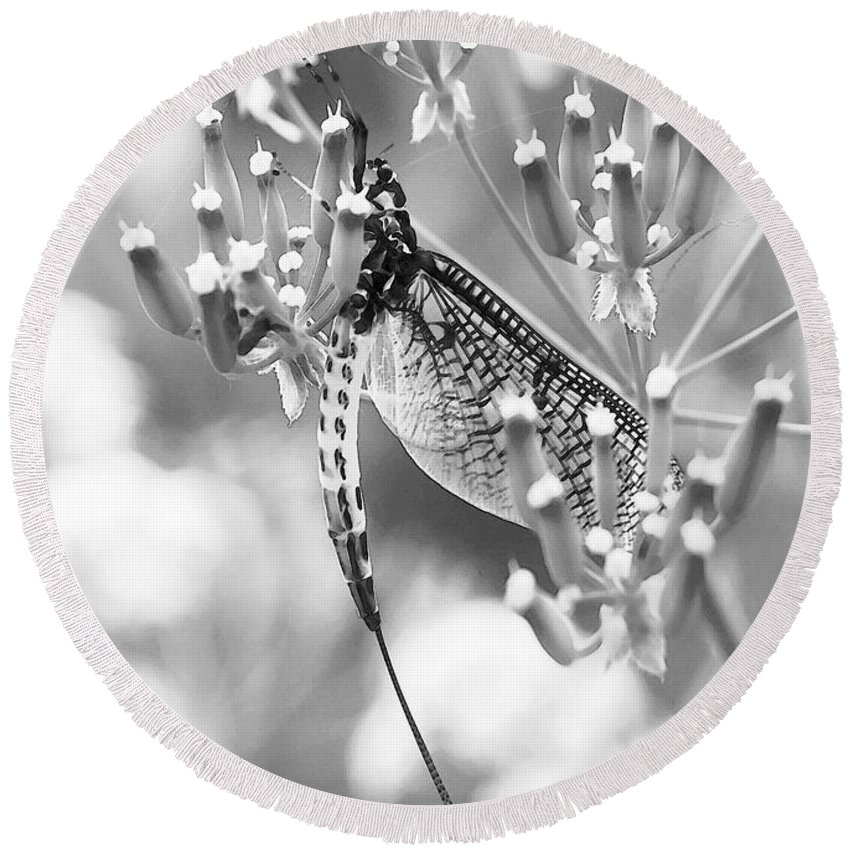 Dragonfly Round Beach Towel featuring the digital art Great Wings Black And White Dragonfly by P Donovan