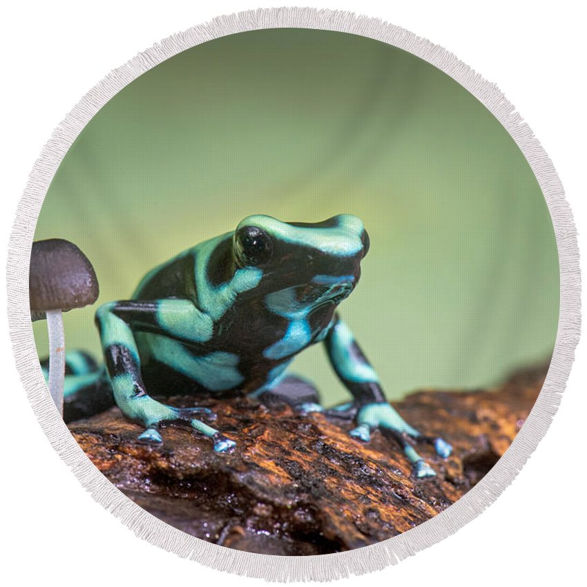 Photography Round Beach Towel featuring the photograph Green And Black Poison Dart Frog by Panoramic Images