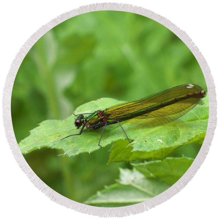 Dragonfly Round Beach Towel featuring the photograph Green Dragonfly On Leaf by Miroslav Nemecek
