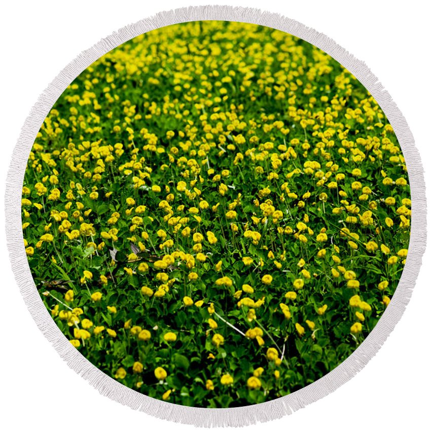 Field Round Beach Towel featuring the photograph Green Field Of Yellow Flowers 3 by Totto Ponce