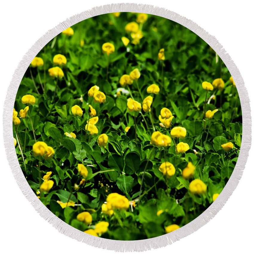Field Round Beach Towel featuring the photograph Green Field Of Yellow Flowers 4 by Totto Ponce