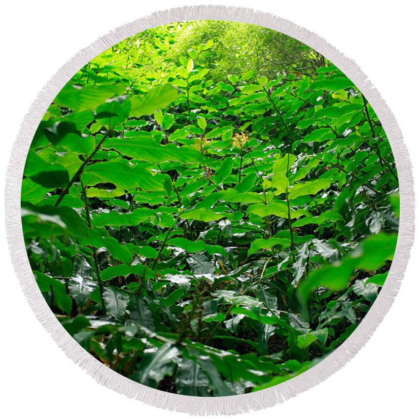 Deep Forest Round Beach Towel featuring the photograph Green Foliage by Gaspar Avila