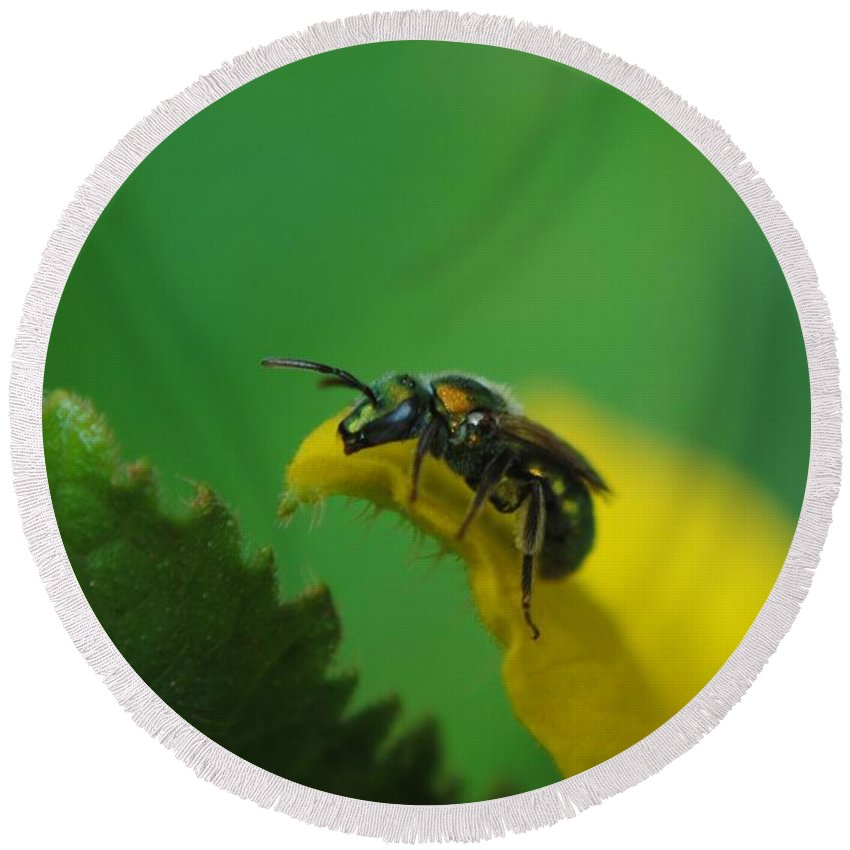 Insect Round Beach Towel featuring the photograph Green Head by Eric Liller