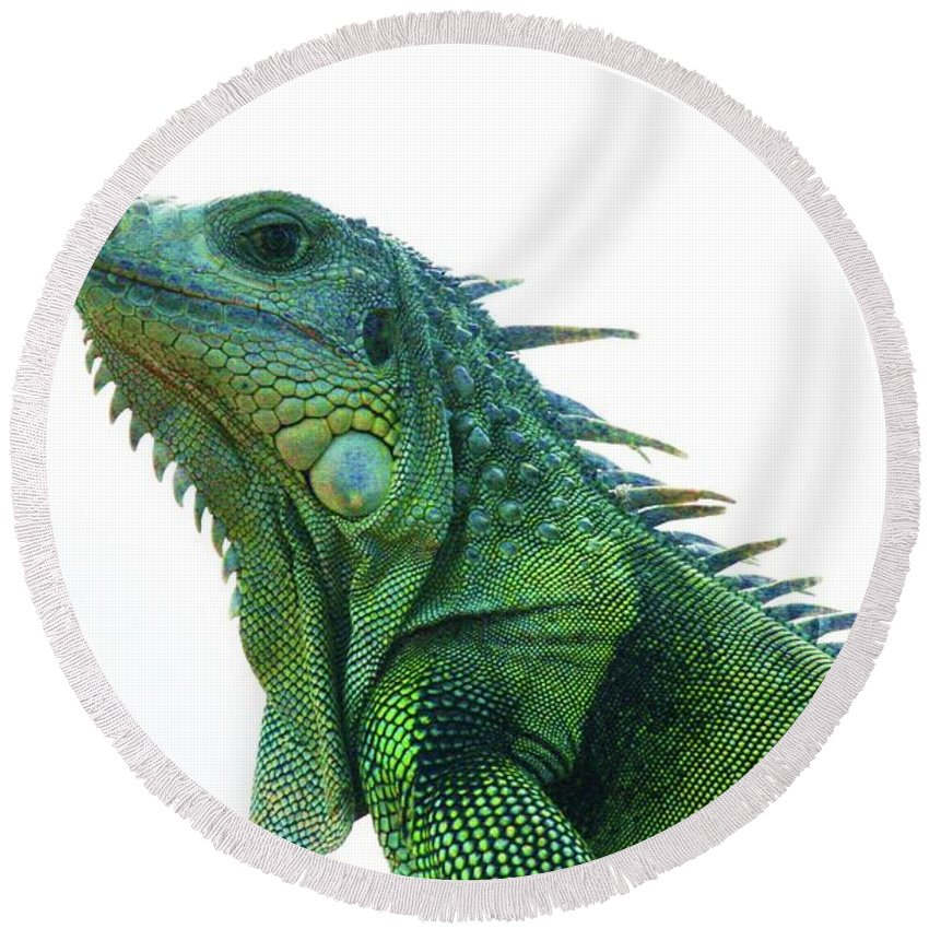 Green Iguana Round Beach Towel featuring the photograph Green Iguana 1 by Gregory E Dean