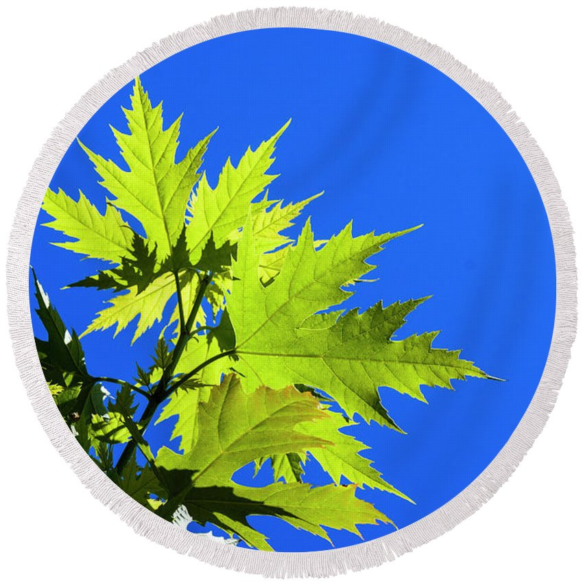 Astoria Round Beach Towel featuring the photograph Green Maple Leaves by Robert Potts
