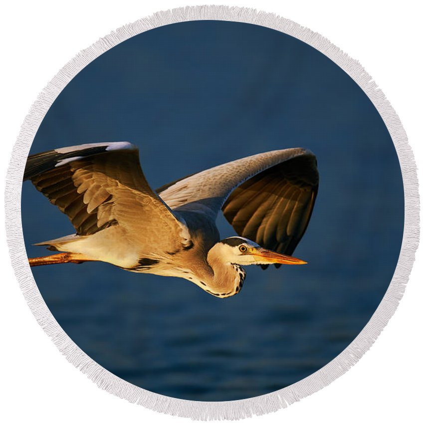 Blue Heron Photographs Round Beach Towels