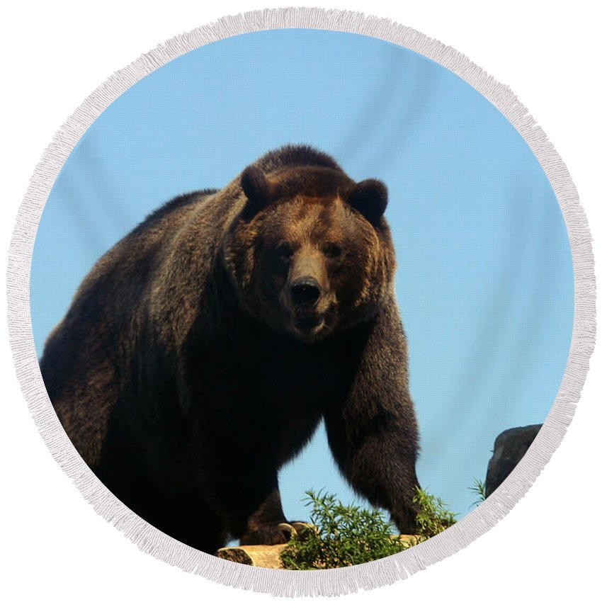 Animal Round Beach Towel featuring the photograph Grizzly-7746 by Gary Gingrich Galleries