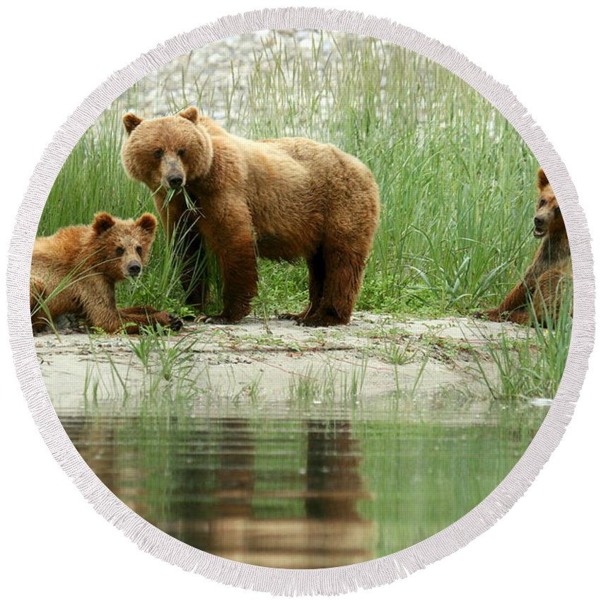 Bears Round Beach Towel featuring the photograph Grizzly Bear Family by Myrna Bradshaw