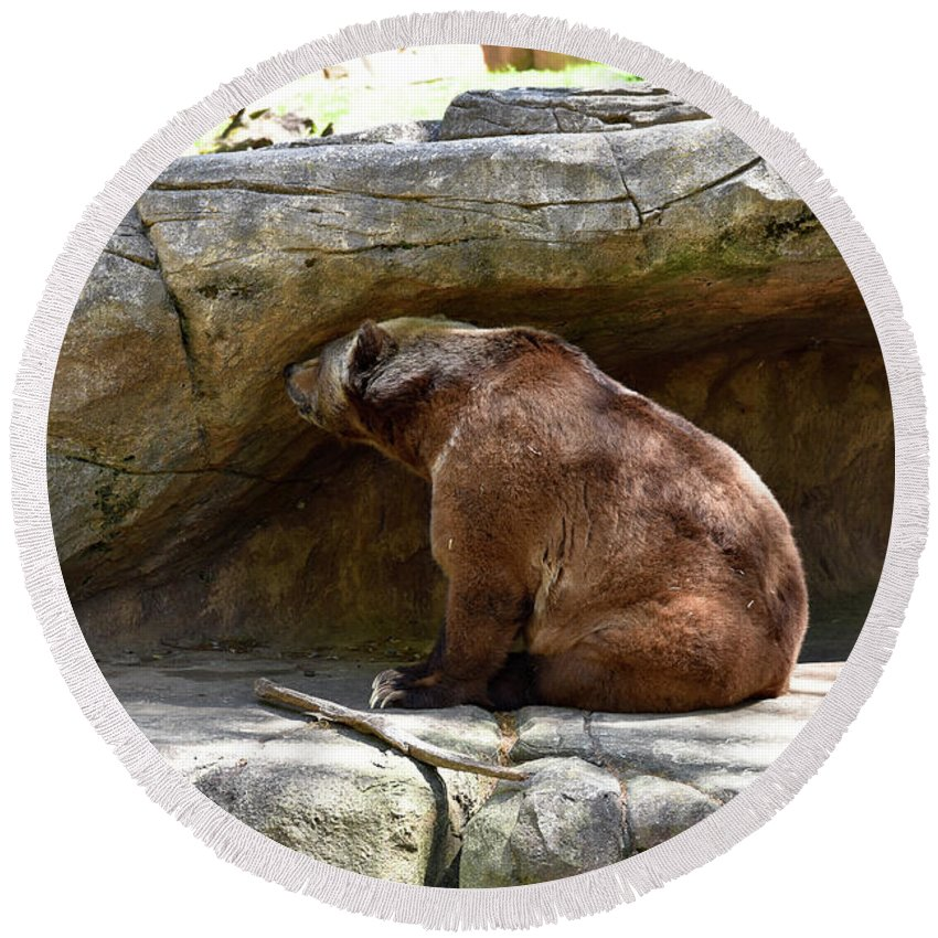 Grizzly Round Beach Towel featuring the photograph Monday by Sherri Johnson