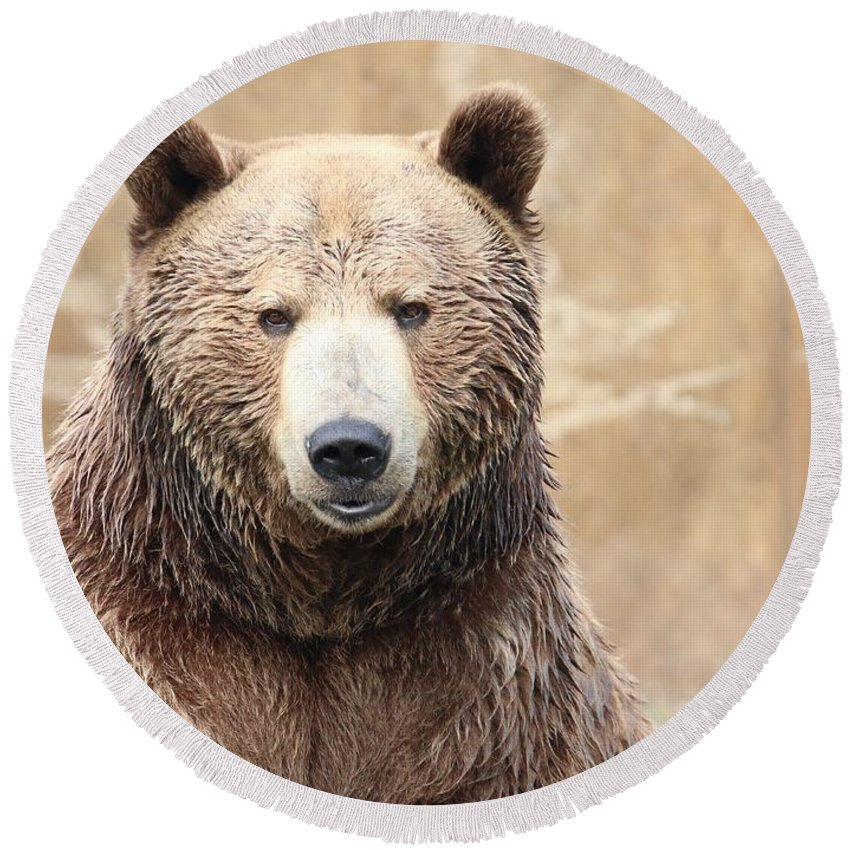 Grizzly Round Beach Towel featuring the photograph Grizzly Portrait by Tammy Crawford
