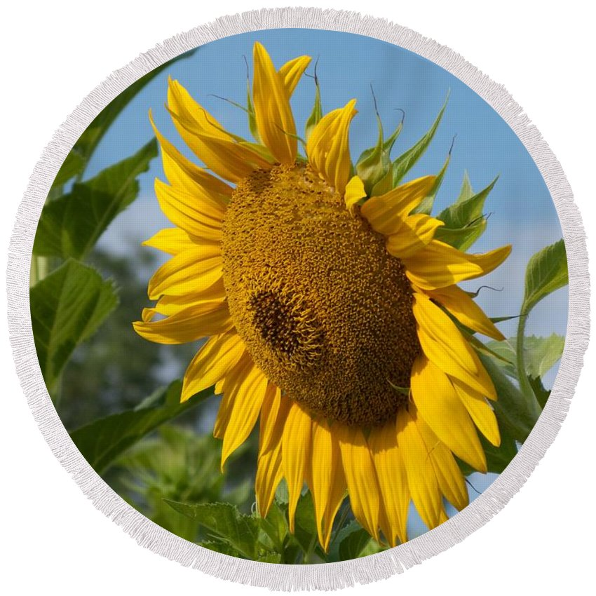 Sunflower Round Beach Towel featuring the photograph Growing Up by Ann Horn