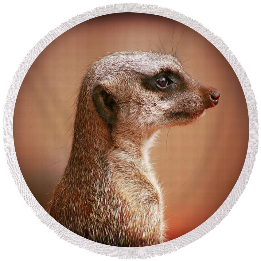 Meerkat Round Beach Towel featuring the photograph Guard Duty by Douglas Barnard