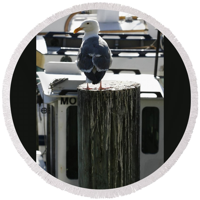 Bird Round Beach Towel featuring the photograph Gull And Pier 1 by Marilyn Hunt