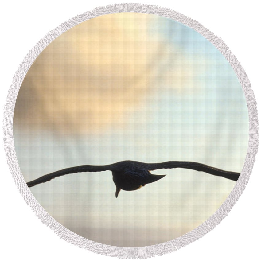 Bird Round Beach Towel featuring the photograph Gull by Jerry McElroy
