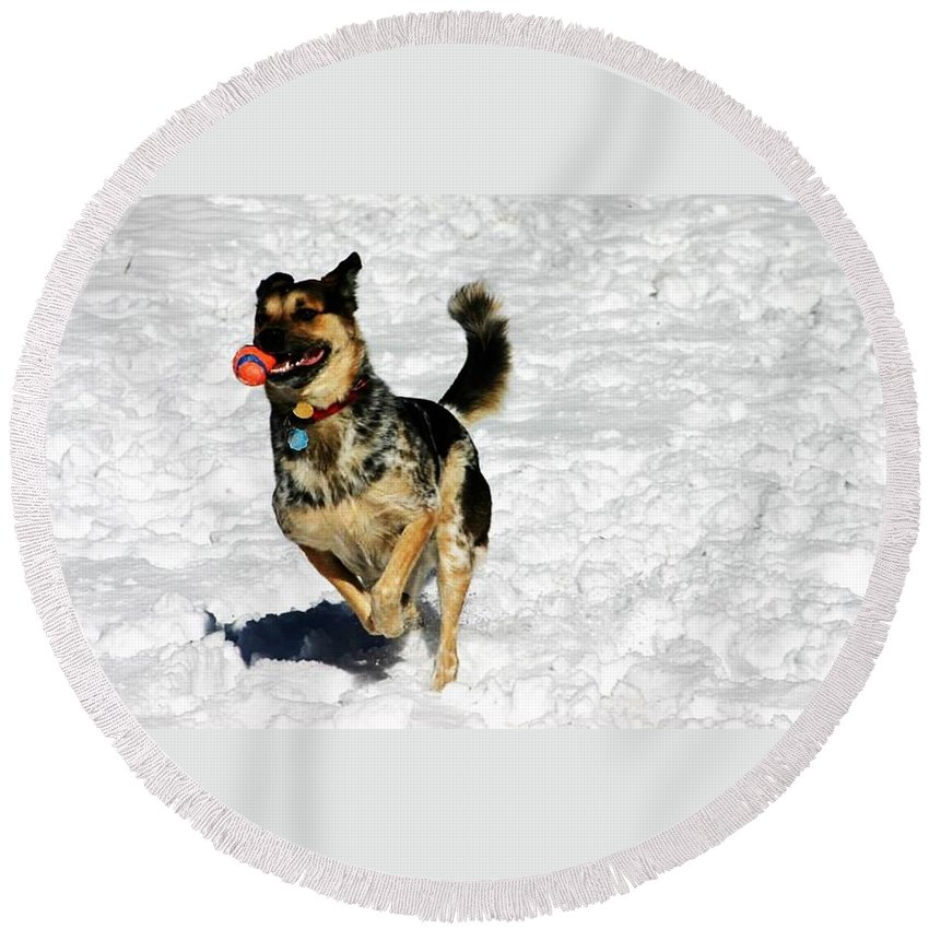 Dog Round Beach Towel featuring the photograph Gumbeaux's Joy by Pattie Frost