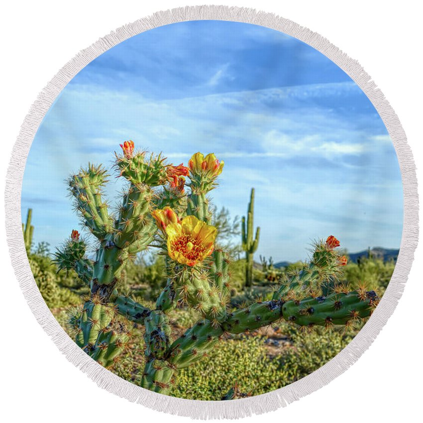 Cactus Round Beach Towel featuring the photograph H D R Desert Bloom by Aimee L Maher ALM GALLERY