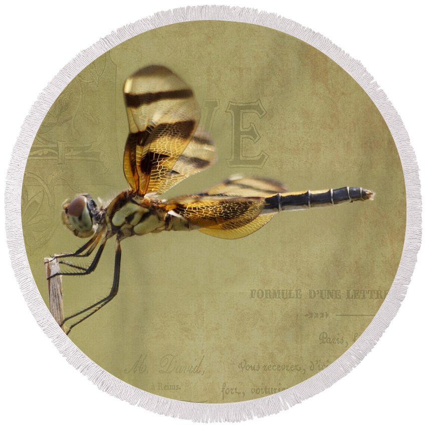 Dragonfly Round Beach Towel featuring the photograph Halloween Pennant Dragonfly by TN Fairey
