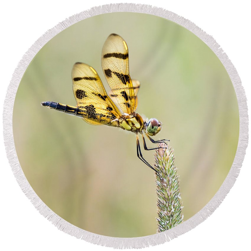 Animal Round Beach Towel featuring the photograph Halloween Pennant V by Abeselom Zerit