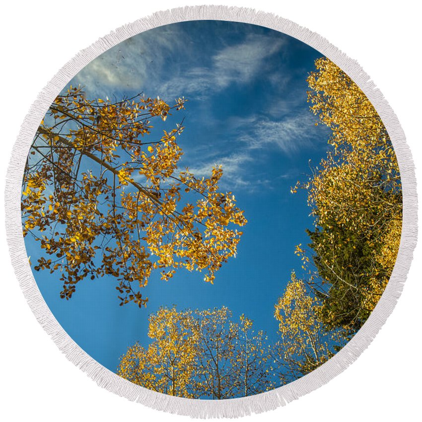 Autumn Round Beach Towel featuring the photograph Hanging Aspen by Robert Bales
