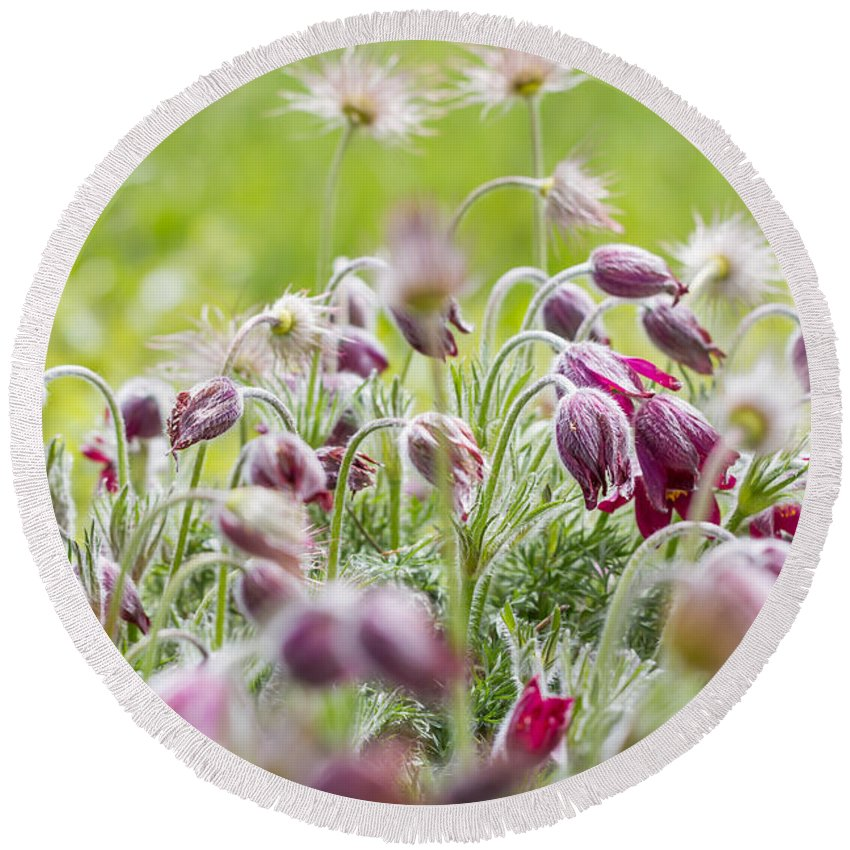 Colorado Round Beach Towel featuring the photograph Hanging Blooms by Ashley M Conger