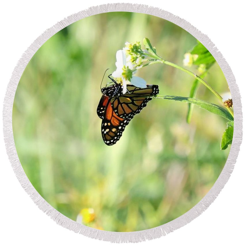 Butterfly Round Beach Towel featuring the photograph Hanging By A Thread by Beth Williams