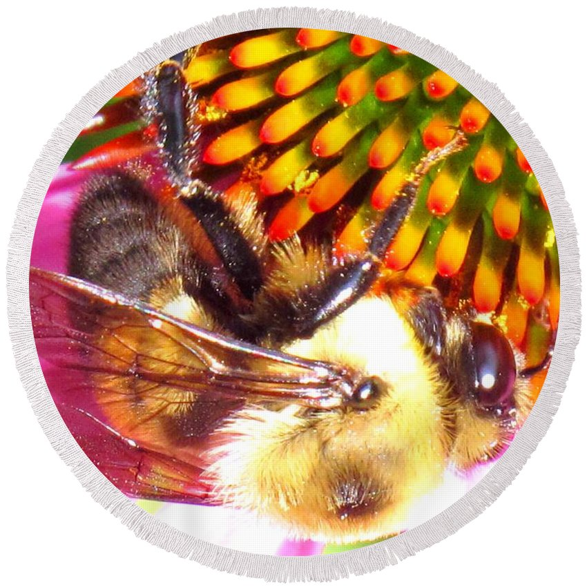 Bee Round Beach Towel featuring the photograph Hanging In There by Ian MacDonald