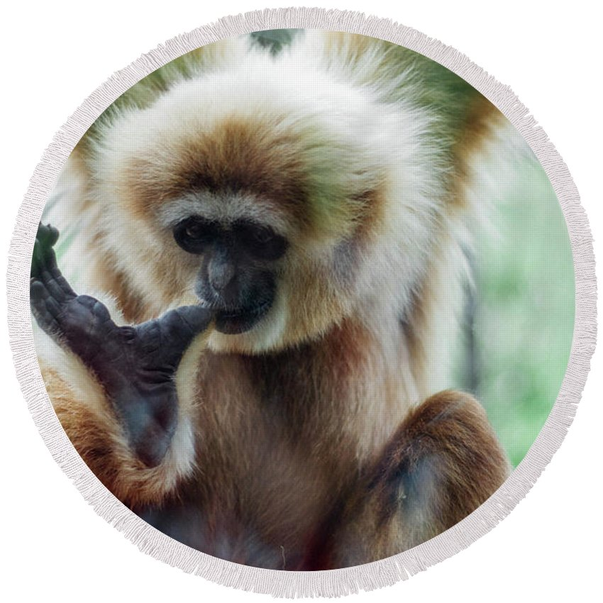 Monkey Round Beach Towel featuring the photograph Hanging Out by Anna Friedrichs