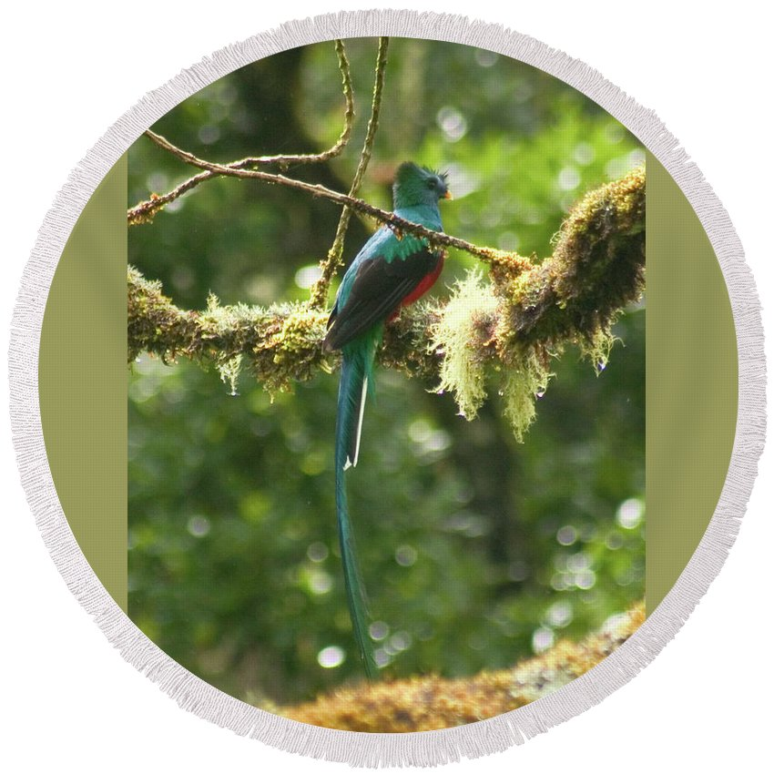 Resplendent Quetzal Round Beach Towel featuring the photograph Hanging With The Moss by Wes Hanson