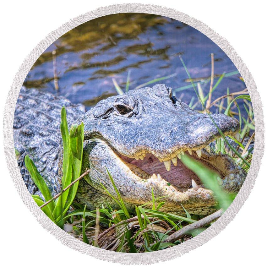 Alligators Round Beach Towel featuring the photograph Happy Gator by Judy Kay