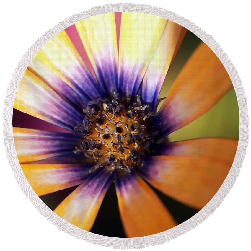 Macro Round Beach Towel featuring the photograph Happy by Lauren Radke